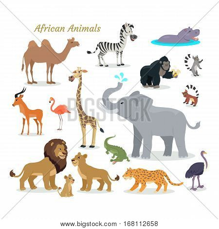 African fauna species. Cute african animals flat vector. Southern predators. Camel, zebra, rhino, gorilla, koala, deer, flamingo, giraffe elephant crocodile tiger lion lion cheetah ostrich