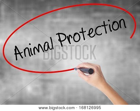 Woman Hand Writing Animal Protection With Black Marker Over Transparent Board