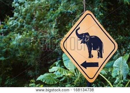 Road sign elephant. Attention elephants on the road. Elephant road sign on green background