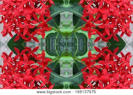 Ixora flower beautiful seamless concept pattern for background