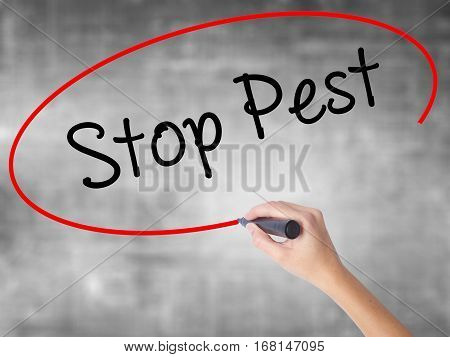 Woman Hand Writing Stop Pest With Black Marker Over Transparent Board
