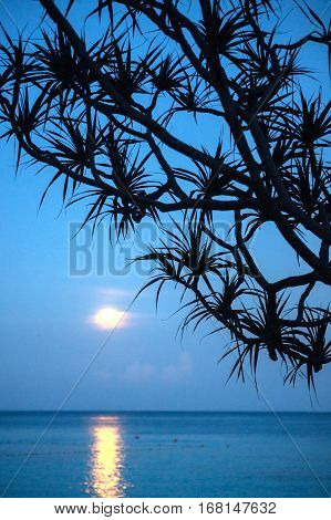 Moonlight on the sea. The moon over the sea