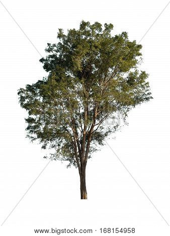 Isolated Green Tree On White Background Graphic Resources.