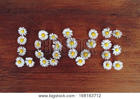 Daisy, romantic, close up, white, emotion, love, feelings, nature, tenderness, valentine's day, flowers, wedding, love, illustration, floral background, daisy. , the word love, love, message, valentine's day, relationships, author, love, wood.