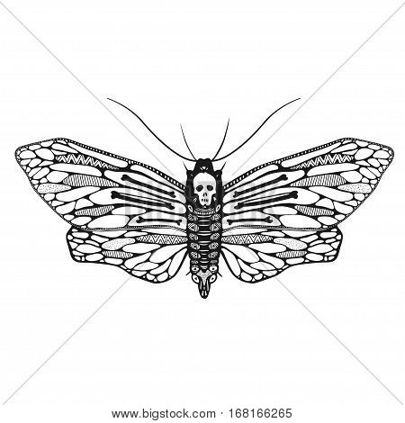 beautiful ornamental butterfly isolated on white, dead head moth with decorative ornamental wings, vector illustration