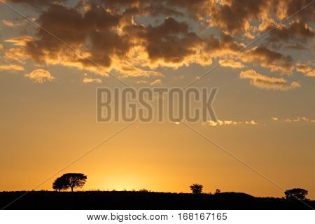 African sunrise with silhouetted trees and clouds, Kalahari desert, South Africa