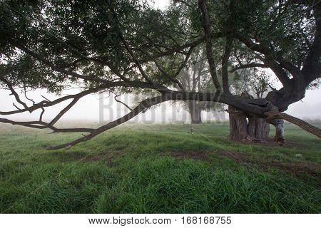 Misty Autumn Morning