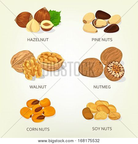 Nut food ingredients. Hazelnut and walnut, corn and soy shell, pine opened nuts. Species plant isolated icons. Vegetarian seed snack, cereal nutrition, agriculture and harvest theme
