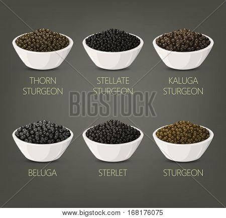 Plates with salty food like thorn sturgeon caviar and russian stellate black caviare, kaluga and sterlet roe in bowl. Eating appetizer and meal luxury tasty ingredient. Vegetarian store or restaurant