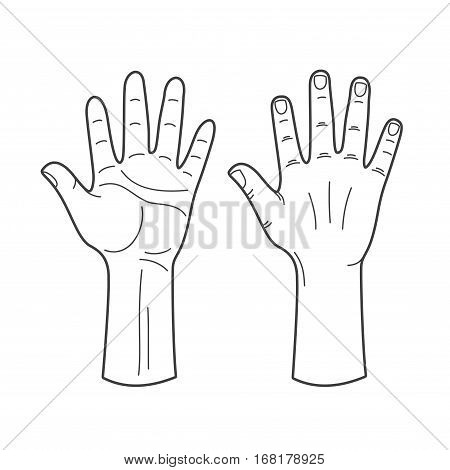 Vector hands illustration in black and white. Human hand outline
