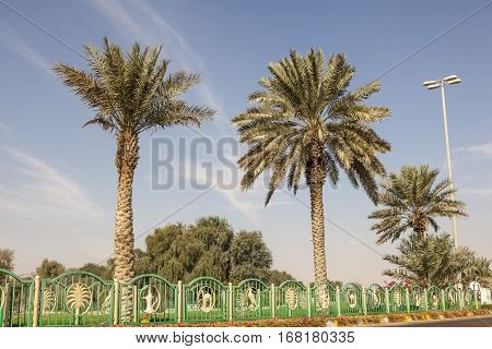 Palm trees in the desert town Mezairaa Liwa Oasis area in the emirate of Abu Dhabi. United Arab Emirates Middle East
