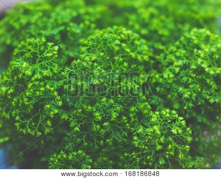 tiny leaf green plant background vintage color tone
