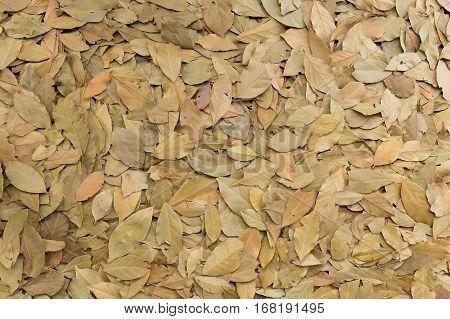 Dry yellow leaf on ground autum seasonal background.