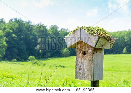 Nesting box on green meadow.