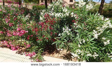 sun bathing colourful bushes in tenerife spain