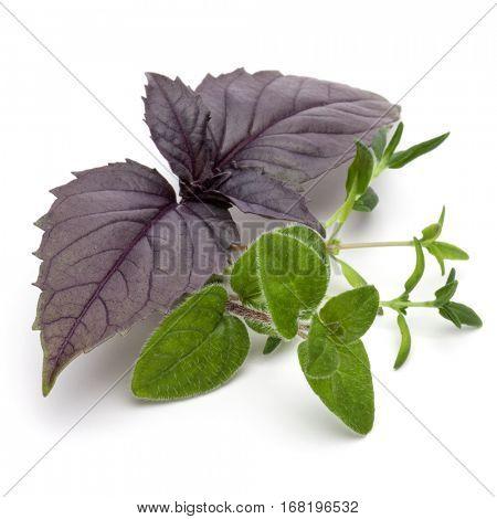 Fresh herb leaves variety isolated on white background. Purple dark opal basil, oregano, thyme, parsley