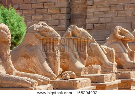 Famous alley of sphinxes at Karnak temple