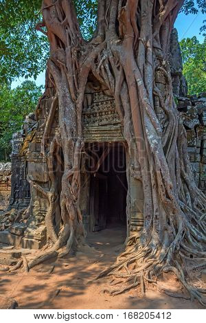 One of gateways of gopura woven by tree roots at Ta Som temple, Angkor, Cambodia