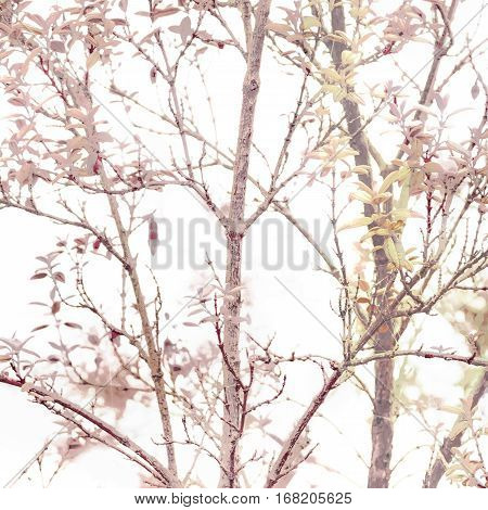 Texture Nature Background