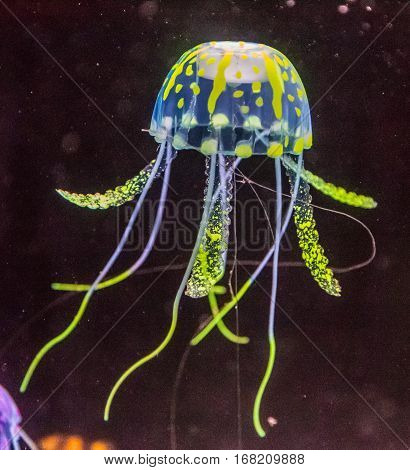 Aquarium life, fish plants marine water medusa
