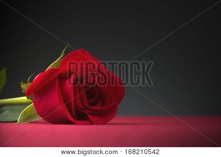 red rose with dark background over red table