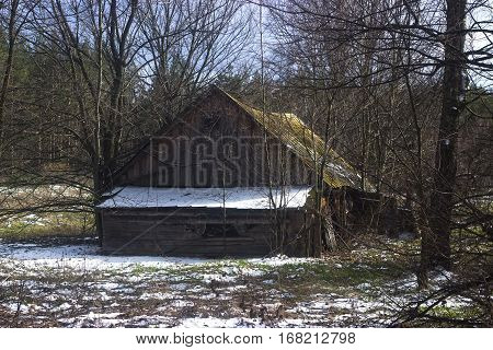 Forester's Cabin in the forest at spring