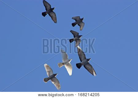 Flock of birds swarming against blue sky.