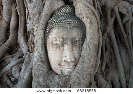 Ancient Buddha head embedded in tree roots closeup. The symbol of the city Ayutthaya, Thailand