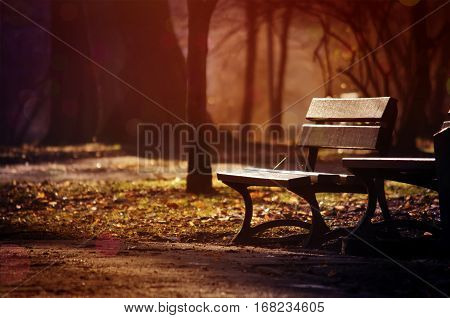 Autumn evening landscape with lonely bench under yellowed trees in the night park - soft focus processing