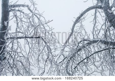 Freezing Rain Covered The Trees And Surface In A Park Forest