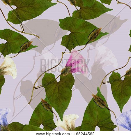 calystegia sepium bindweed (convolvulus morning-glory). Colorful texture of pressed dry flowers. Seamless pattern for continuous replicate. Beautiful photo collage.