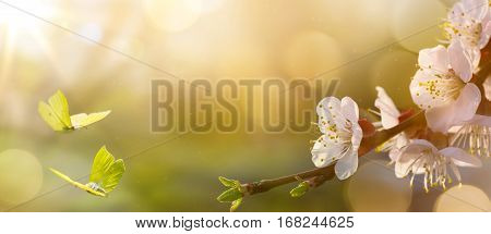 Spring flower background; Easter landscape with spring flower and butterfly