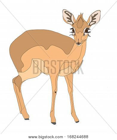 Damara Dik Dik Standing Side View