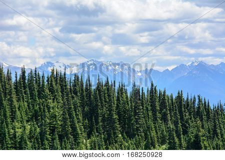 Forest landscape in the mountains, Olympic National Park, Washington, USA