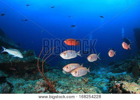 Scuba dive coral reef fish