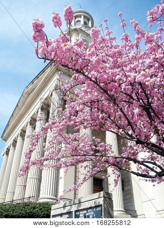 Sakura near Presbyterian Church in Washington USA April 7 2010