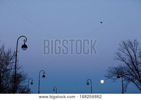 Night scene with sky, fullmoon, trees and street lamps