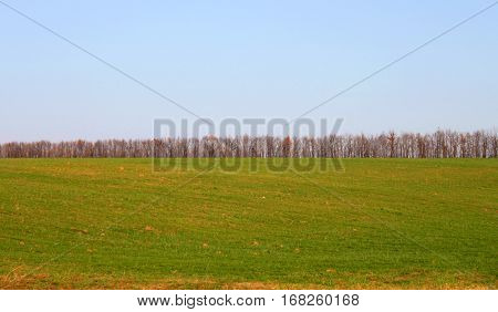Germination of winter crops in the autumn