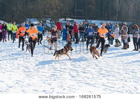 OLDENZAAL NETHERLANDS - JANUARY 22 2017: Start of a canicross running in a snow white landscape