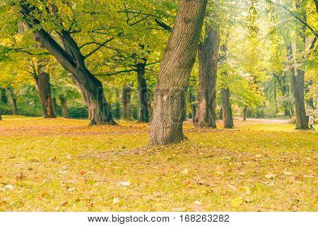 Autumn beutiful park landscape in the city.