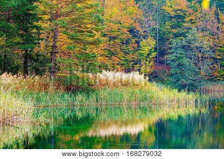 Autum Forest Lake Kozjak In Plitvice
