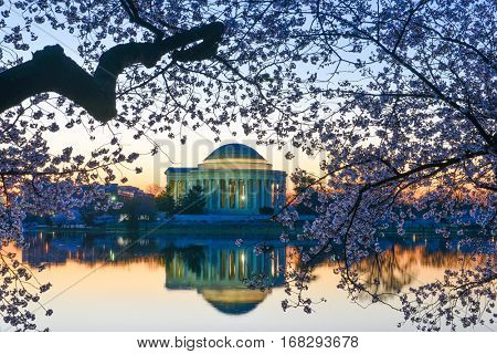 Washington DC during Cherry Blossom Festival - Washington DC USA