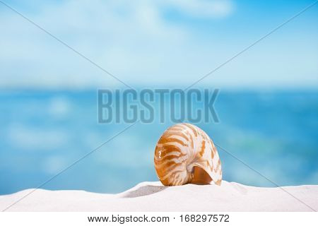 nautilus shell  on white beach  sand and blue seascape background