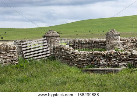 Orkneys Scotland - June 5 2012: The wider area around Skara Brae Neolithic settlement shows green meadows and gray-brown stone walls. Light blue sky and black sheep on the grass.