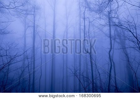Foggy forest in winter background