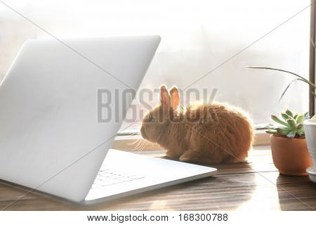 Cute funny rabbit and laptop on window sill in sunny day
