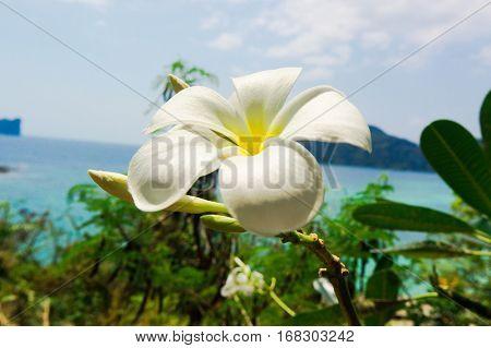 Sunny Petals Tropical Verdure