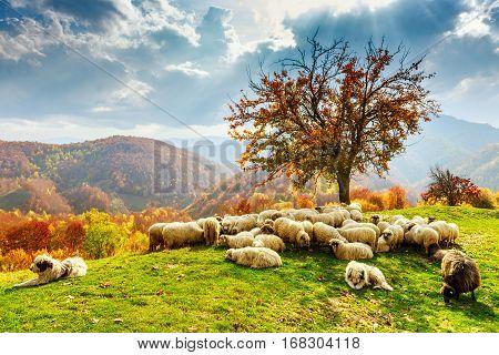 Autumn Landscape In The Romanian Carpathians