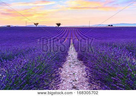 Lavender Field Summer Landscape Near Valensole