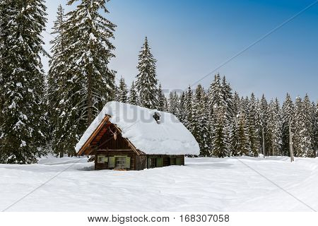 Winter Forest In Alps